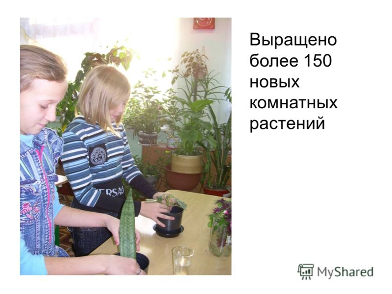 Выращено более 150 новых комнатных растений