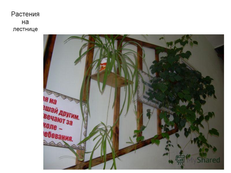 Растения на лестнице