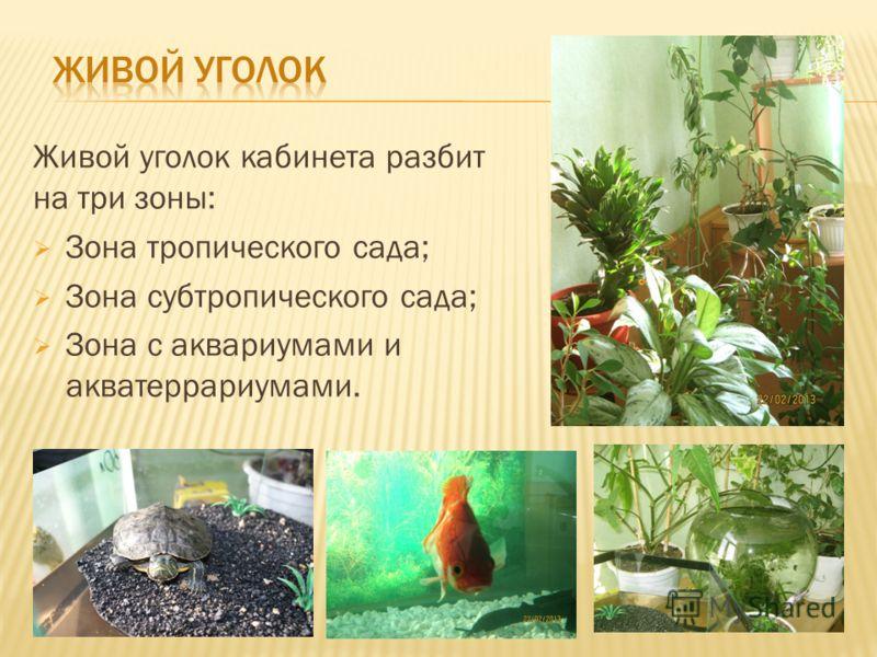 Живой уголок кабинета разбит на три зоны: Зона тропического сада; Зона субтропического сада; Зона с аквариумами и акватеррариумами.