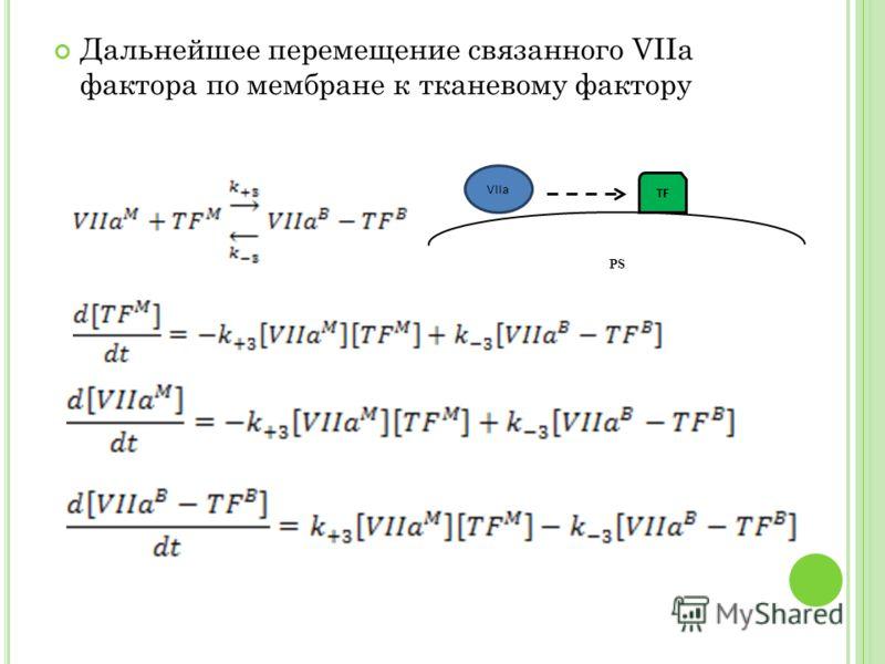 Дальнейшее перемещение связанного VIIa фактора по мембране к тканевому фактору PS TF VIIa