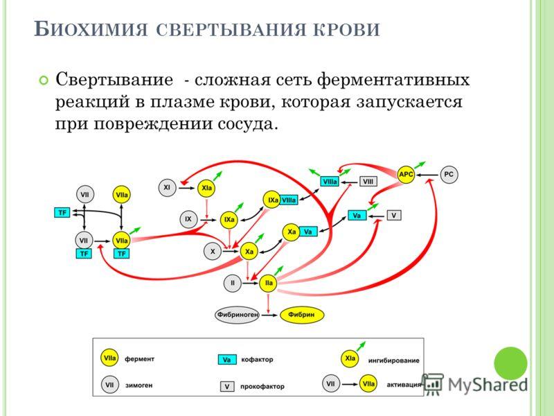 Б ИОХИМИЯ СВЕРТЫВАНИЯ КРОВИ Свертывание - сложная сеть ферментативных реакций в плазме крови, которая запускается при повреждении сосуда.