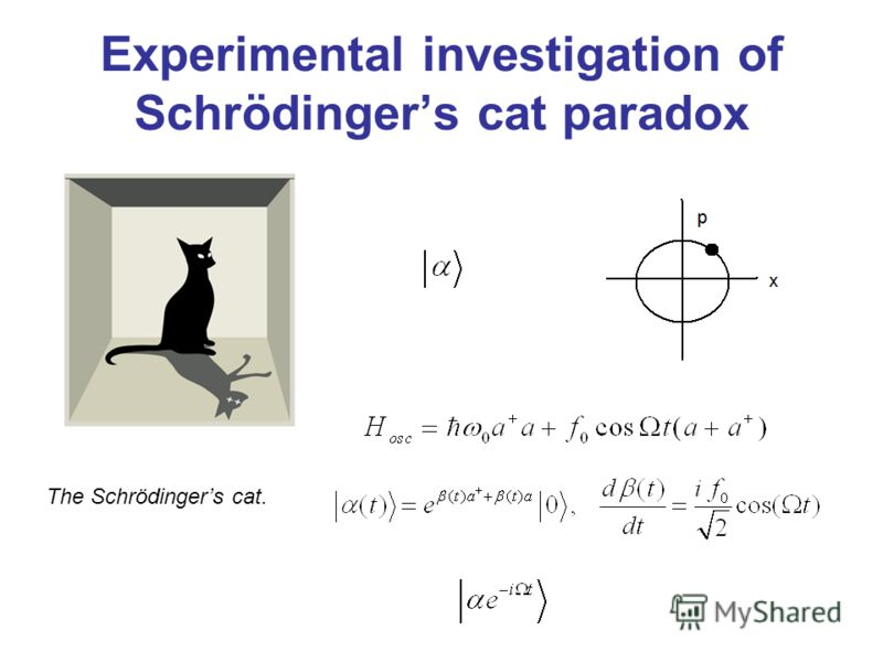 Experimental investigation of Schrödingers cat paradox The Schrödingers cat.