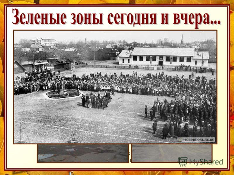 Горная сосна, красиво окаймляющая площадь Победы и дубовая роща вдоль площади посажены в 70 – е годы