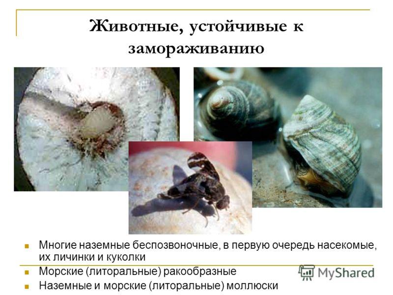 Животные, устойчивые к замораживанию Многие наземные беспозвоночные, в первую очередь насекомые, их личинки и куколки Морские (литоральные) ракообразные Наземные и морские (литоральные) моллюски