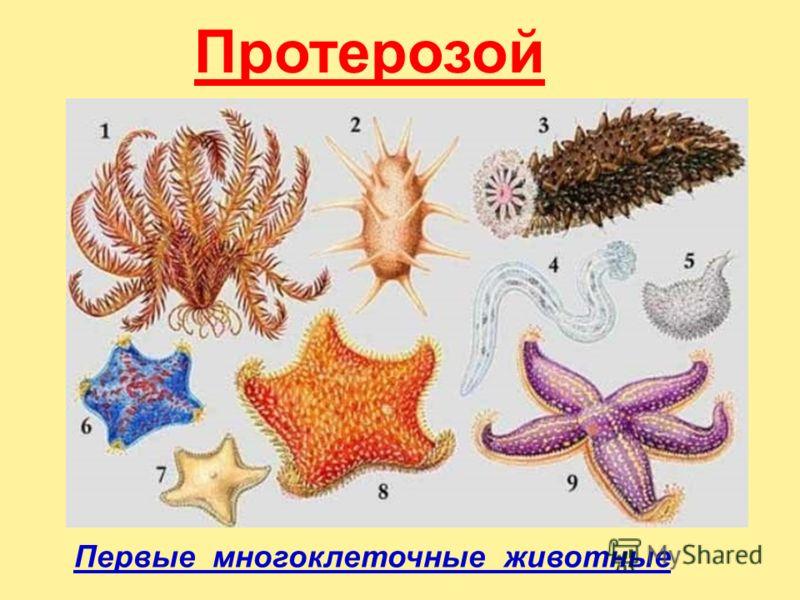 Протерозой Первые многоклеточные животные