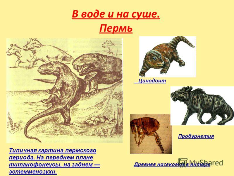 В воде и на суше. Пермь Цинодонт Пробурнетия Древнее насекомое в янтаре Типичная картина пермского периода. На переднем плане титанофонеусы, на заднем эстемменозухи.