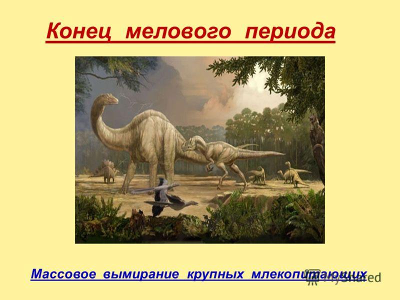 Конец мелового периода Массовое вымирание крупных млекопитающих
