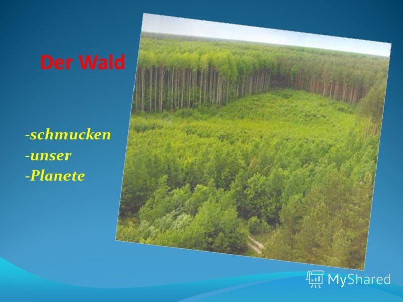 Der Wald -schmucken -unser -Planete