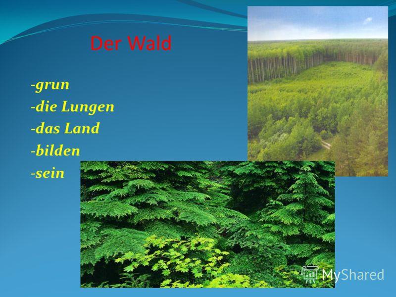 Der Wald -grun -die Lungen -das Land -bilden -sein