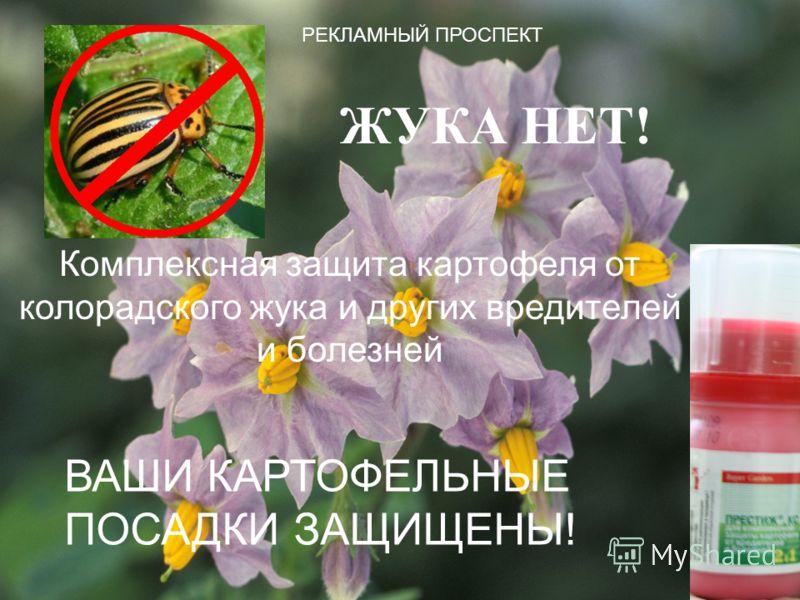 ЖУКА НЕТ! Комплексная защита картофеля от колорадского жука и других вредителей и болезней ВАШИ КАРТОФЕЛЬНЫЕ ПОСАДКИ ЗАЩИЩЕНЫ! РЕКЛАМНЫЙ ПРОСПЕКТ
