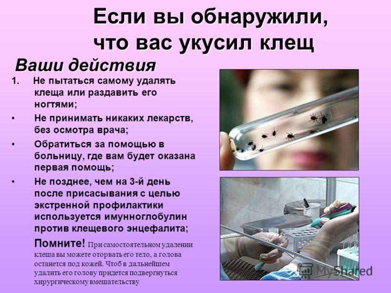 Если вы обнаружили, что вас укусил клещ Ваши действия 1. Не пытаться самому удалять клеща или раздавить его ногтями; Не принимать никаких лекарств, без осмотра врача; Обратиться за помощью в больницу, где вам будет оказана первая помощь; Не позднее,