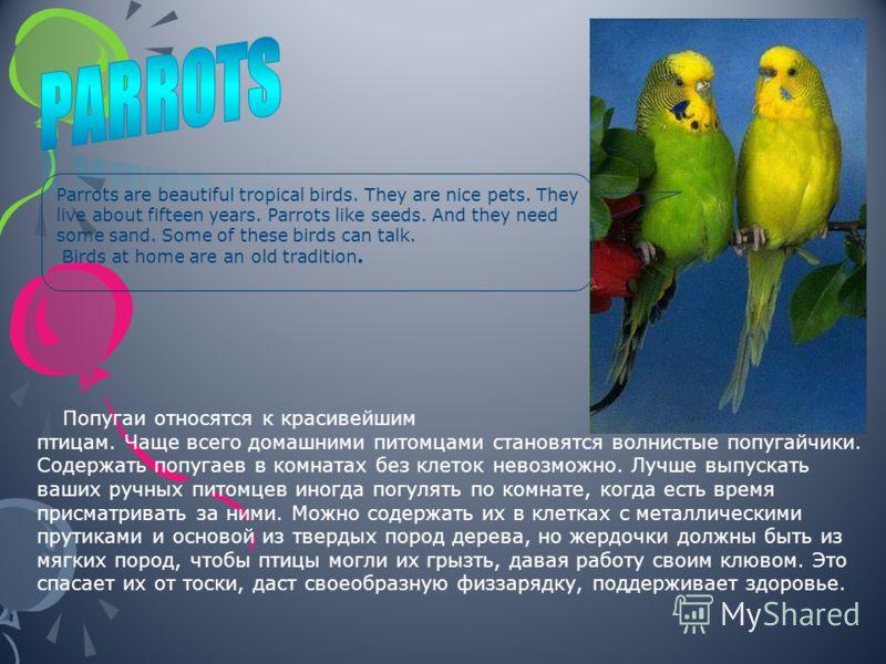 Попугаи относятся к красивейшим тропическим птицам. Чаще всего домашними питомцами становятся волнистые попугайчики. Содержать попугаев в комнатах без клеток невозможно. Лучше выпускать ваших ручных питомцев иногда погулять по комнате, когда есть вре