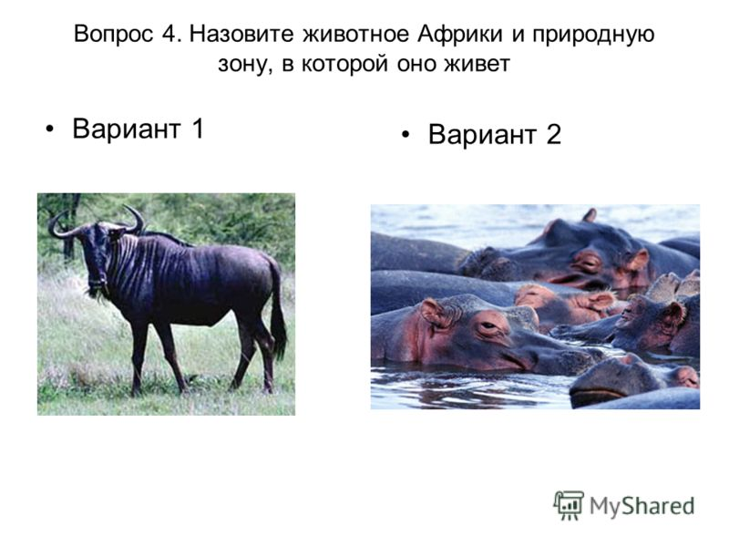 Вопрос 4. Назовите животное Африки и природную зону, в которой оно живет Вариант 1 Вариант 2