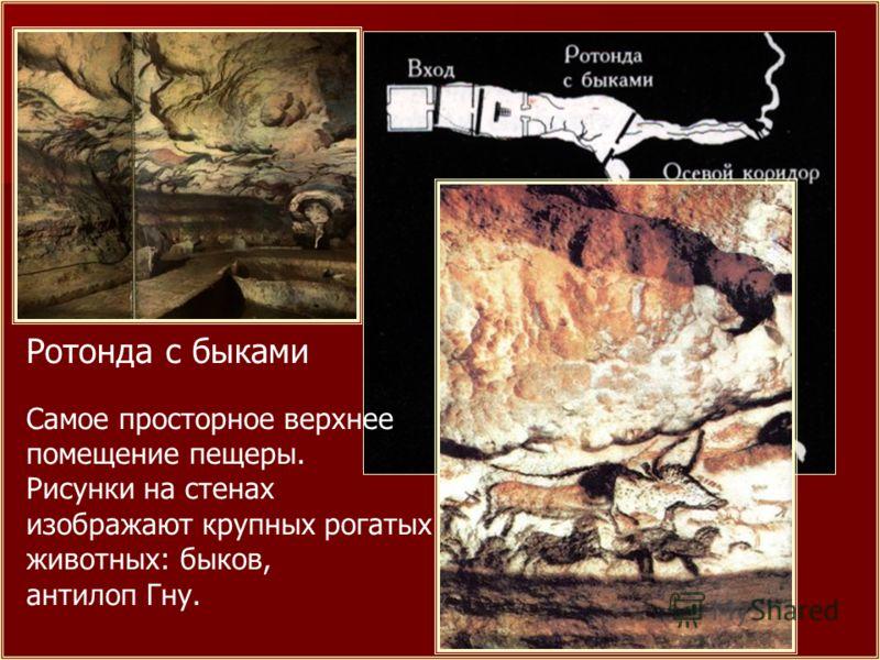 Ротонда с быками Самое просторное верхнее помещение пещеры. Рисунки на стенах изображают крупных рогатых животных: быков, антилоп Гну.