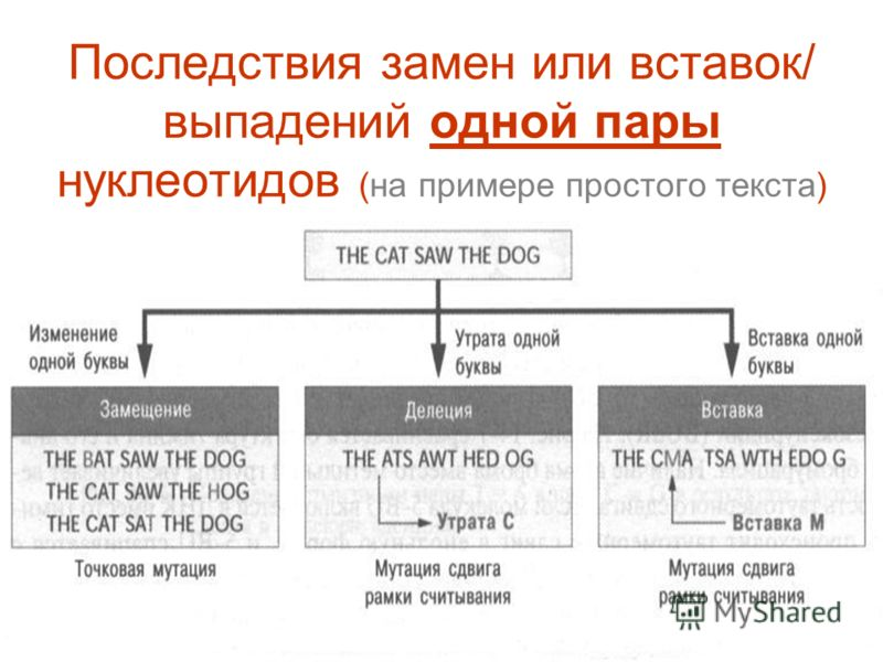 Последствия замен или вставок/ выпадений одной пары нуклеотидов (на примере простого текста)