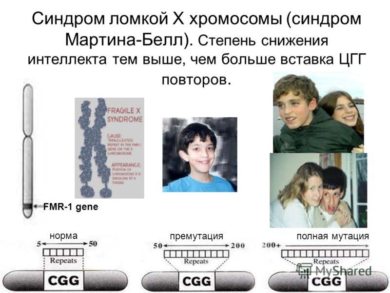 Синдром ломкой Х хромосомы (синдром Мартина-Белл). Степень снижения интеллекта тем выше, чем больше вставка ЦГГ повторов. FMR-1 gene норма премутацияполная мутация