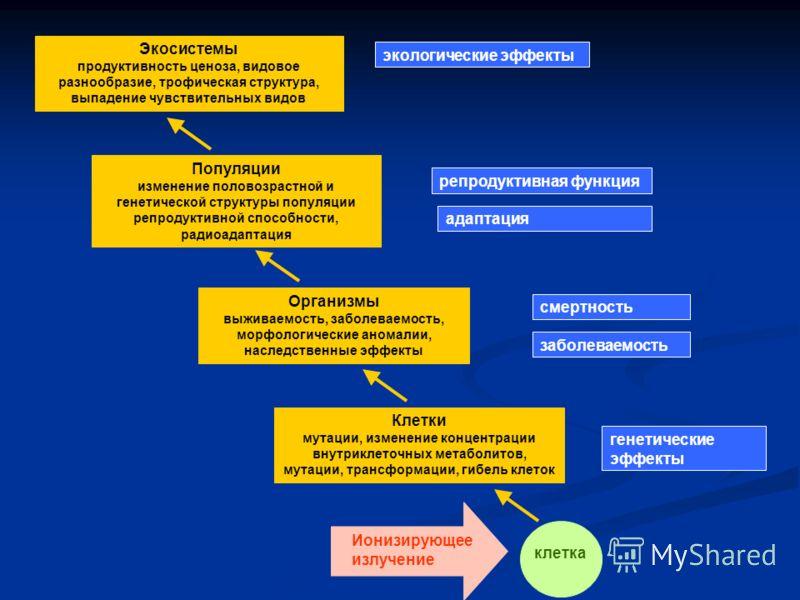 Клетки мутации, изменение концентрации внутриклеточных метаболитов, мутации, трансформации, гибель клеток Ионизирующее излучение клетка Популяции изменение половозрастной и генетической структуры популяции репродуктивной способности, радиоадаптация О