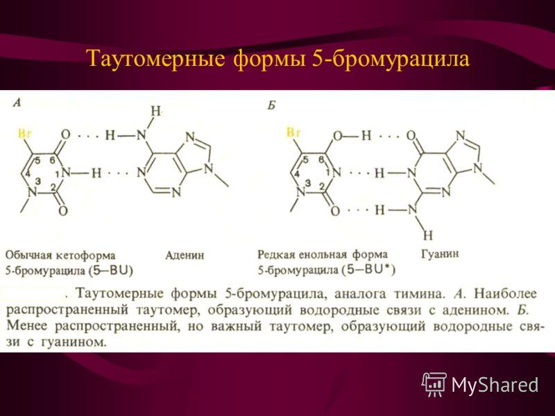 Таутомерные формы 5-бромурацила