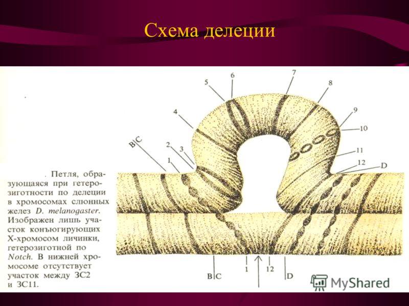 Схема делеции