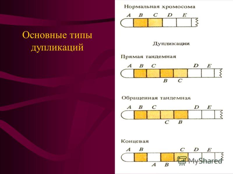 Основные типы дупликаций