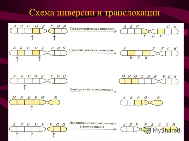 Схема инверсии и транслокации