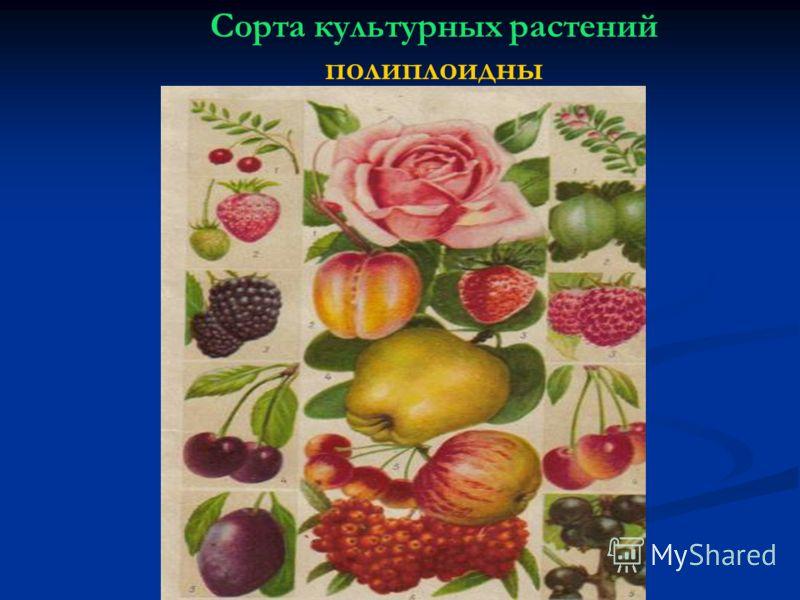 Сорта культурных растений полиплоидны