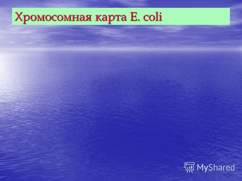 Хромосомная карта E. coli