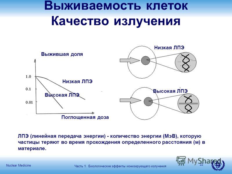 Nuclear Medicine 22 Низкая ЛПЭ Высокая ЛПЭ Низкая ЛПЭ Поглощенная доза Выжившая доля ЛПЭ (линейная передача энергии) - количество энергии (МэВ), которую частицы теряют во время прохождения определенного расстояния (м) в материале. Выживаемость клеток