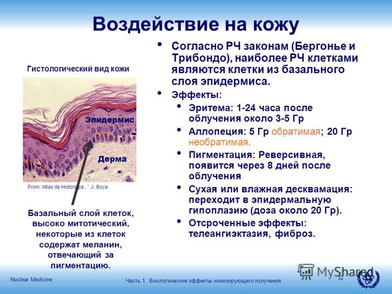 Nuclear Medicine 32 Воздействие на кожу Согласно РЧ законам (Бергонье и Трибондо), наиболее РЧ клетками являются клетки из базального слоя эпидермиса. Эффекты: Эритема: 1-24 часа после облучения около 3-5 Гр Аллопеция: 5 Гр обратимая; 20 Гр необратим