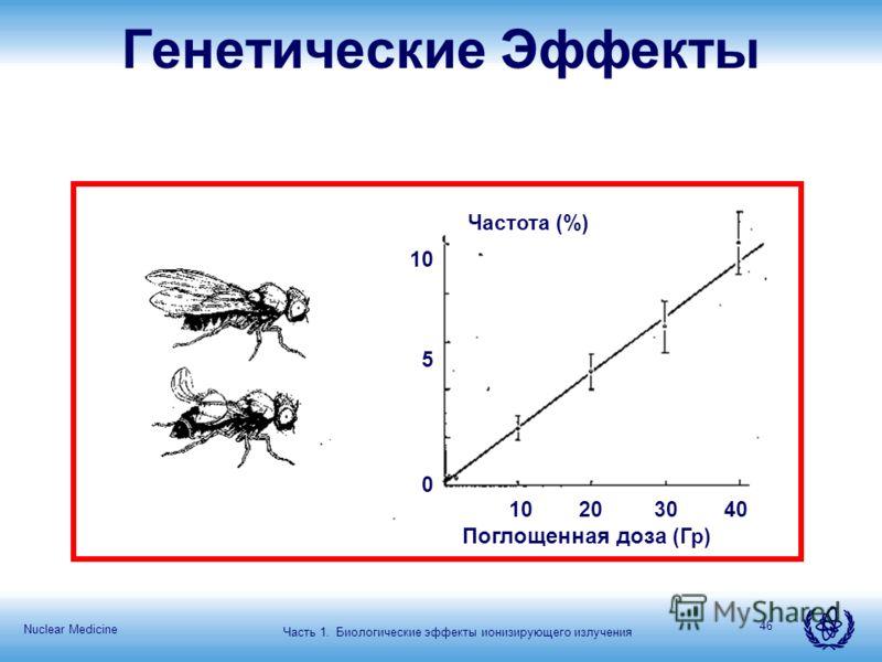 Nuclear Medicine 46 Частота (%) 10 20 30 40 Поглощенная доза (Гр) 10 5 0 Генетические Эффекты Часть 1. Биологические эффекты ионизирующего излучения