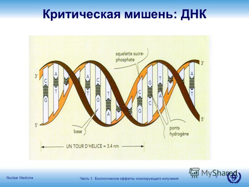 Nuclear Medicine 9 Критическая мишень: ДНК Часть 1. Биологические эффекты ионизирующего излучения