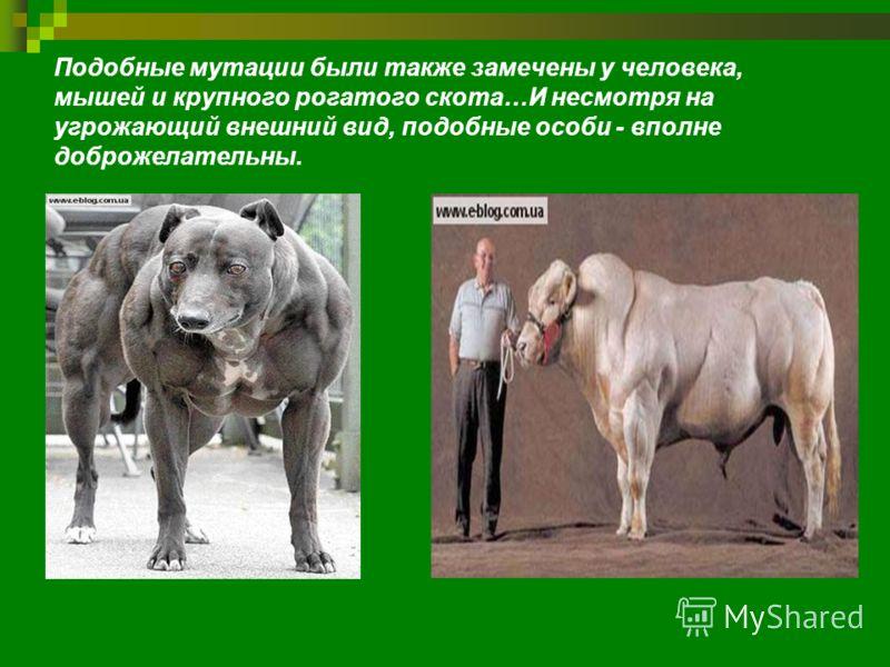 Подобные мутации были также замечены у человека, мышей и крупного рогатого скота…И несмотря на угрожающий внешний вид, подобные особи - вполне доброжелательны.