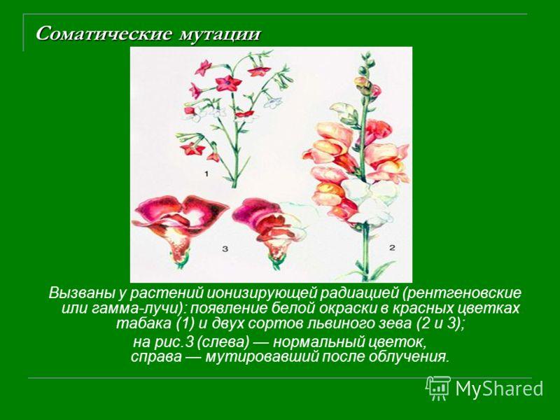 Соматические мутации Вызваны у растений ионизирующей радиацией (рентгеновские или гамма-лучи): появление белой окраски в красных цветках табака (1) и двух сортов львиного зева (2 и 3); на рис.3 (слева) нормальный цветок, справа мутировавший после обл