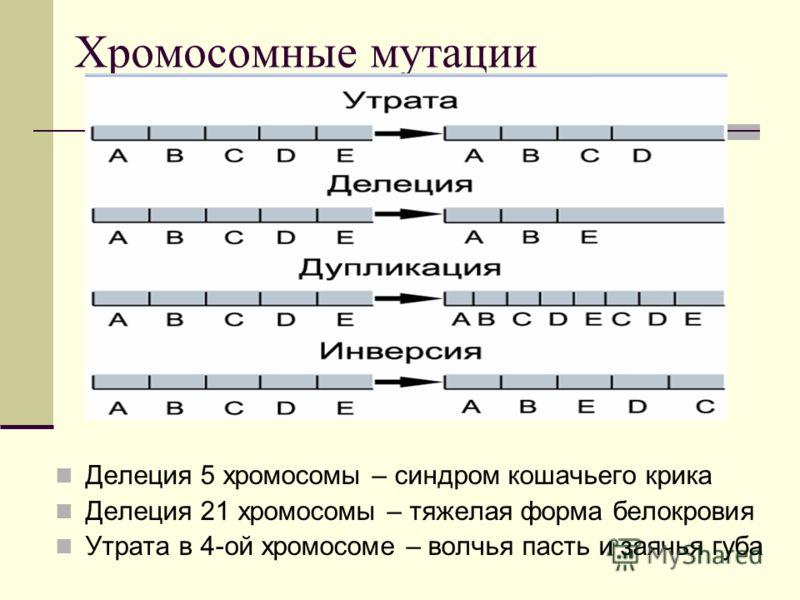 Хромосомные мутации Делеция 5 хромосомы – синдром кошачьего крика Делеция 21 хромосомы – тяжелая форма белокровия Утрата в 4-ой хромосоме – волчья пасть и заячья губа