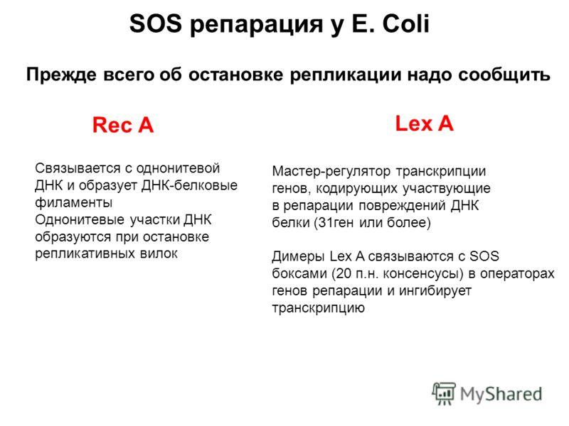 Прежде всего об остановке репликации надо сообщить Rec A Cвязывается с однонитевой ДНК и образует ДНК-белковые филаменты Однонитевые участки ДНК образуются при остановке репликативных вилок Lex A Мастер-регулятор транскрипции генов, кодирующих участв