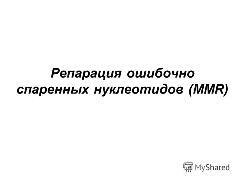 Репарация ошибочно спаренных нуклеотидов (MMR)