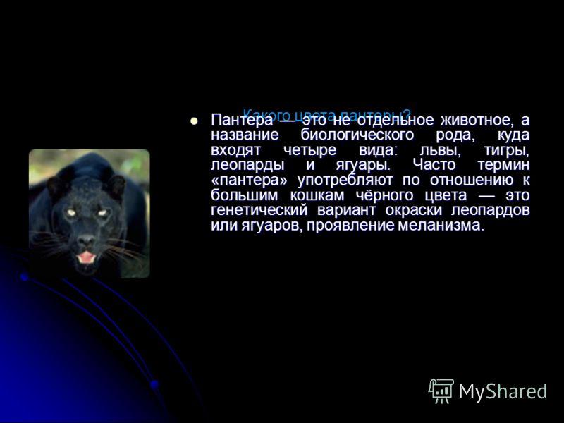 Какого цвета пантеры? Пантера это не отдельное животное, а название биологического рода, куда входят четыре вида: львы, тигры, леопарды и ягуары. Часто термин «пантера» употребляют по отношению к большим кошкам чёрного цвета это генетический вариант
