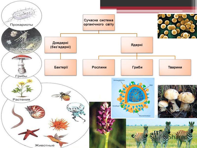 Сучасна система органічного світу Доядерні (безядерні) Бактерії Ядерні Рослини ГрибиТварини