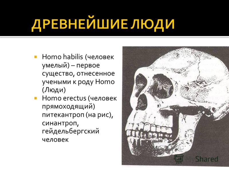 Homo habilis (человек умелый) – первое существо, отнесенное учеными к роду Homo (Люди) Homo erectus (человек прямоходящий) питекантроп (на рис), синантроп, гейдельбергский человек