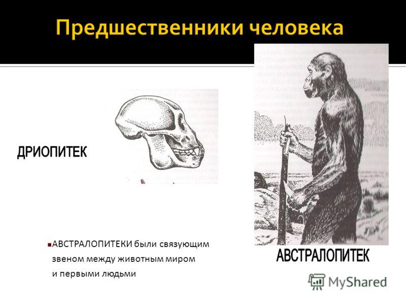 АВСТРАЛОПИТЕКИ были связующим звеном между животным миром и первыми людьми