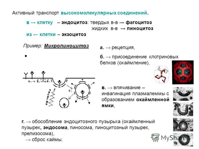 II. Поверхностный аппарат клетки Обменно-транспортная функция Выделяют 2 вида мембранного транспорта: пассивный и активный. Активный транспорт идет против градиента концентрации веществ, с затратой энергии Активный транспорт можно разделить на 2 вида