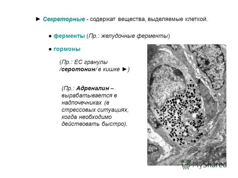 III. Цитоплазма. Состоит из: - гиалоплазмы, - органоидов и - включений. Включения Включения. Непостоянные структуры, их наличие зависит от метаболического состояния клетки Трофические Трофические - выполняют функцию запаса питательных веществ липидны