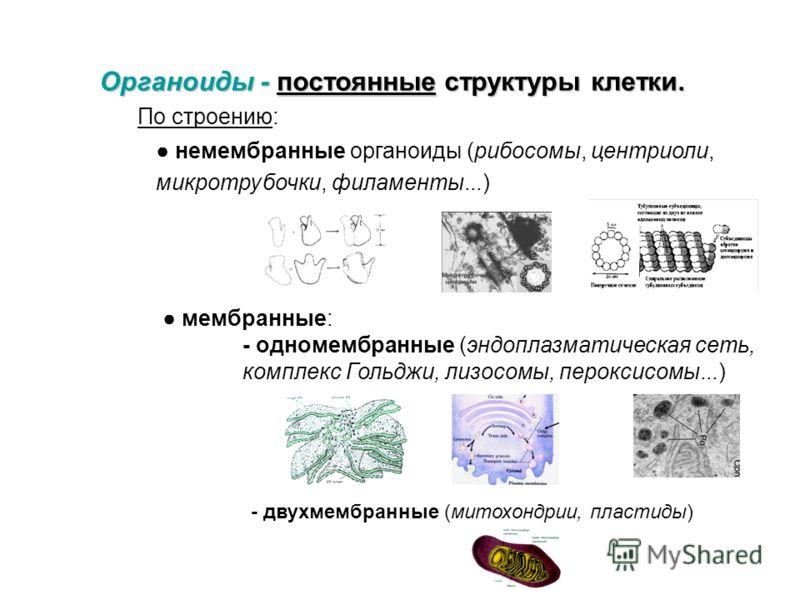 Специфические (пигментные) Специфические (пигментные) - характерны для специализированных клеток Пр.: гемоглобин в эритроцитах Пр.: меланин в меланоцитах