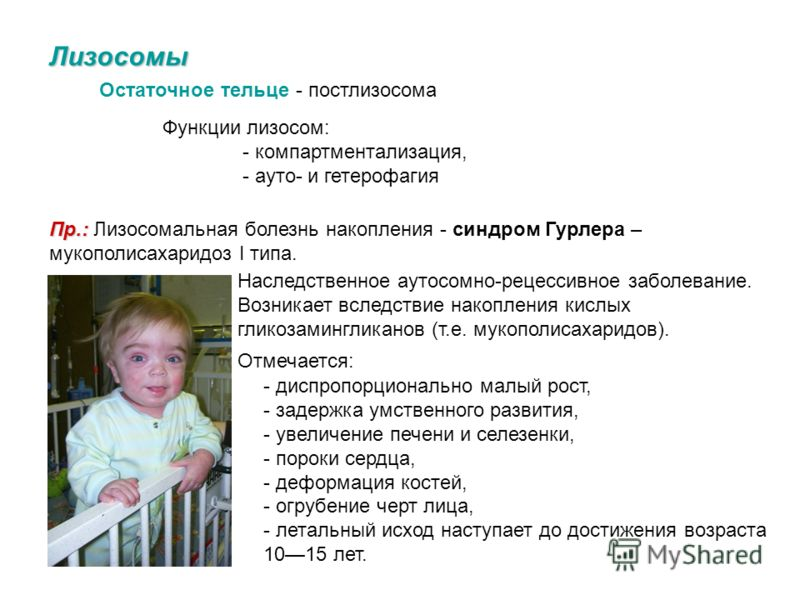 Лизосомы Вторичная лизосома - фаголизосома – пинолизосома – пищеварительная вакуоль – гетерофагосома – аутофагосома