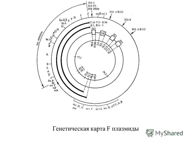 Генетическая карта F плазмиды
