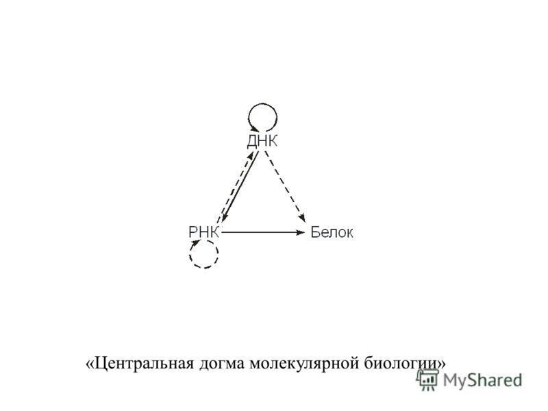 «Центральная догма молекулярной биологии»