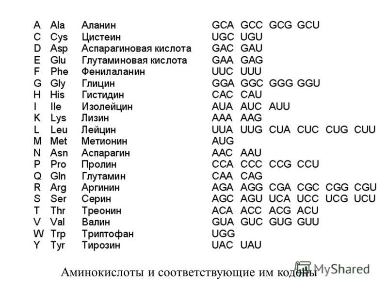 Аминокислоты и соответствующие им кодоны
