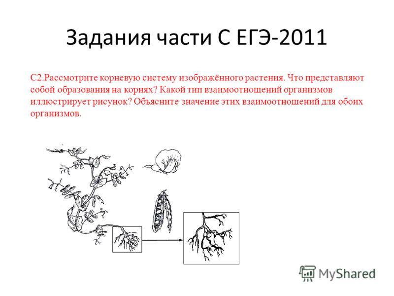 Задания части С ЕГЭ-2011 С2.Рассмотрите корневую систему изображённого растения. Что представляют собой образования на корнях? Какой тип взаимоотношений организмов иллюстрирует рисунок? Объясните значение этих взаимоотношений для обоих организмов.