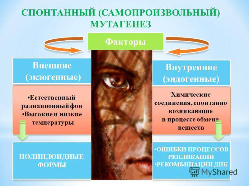 Факторы Внешние (экзогенные) Внутренние (эндогенные) Естественный радиационный фон Высокие и низкие температуры Химические соединения, спонтанно возникающие в процессе обмена веществ СПОНТАННЫЙ (САМОПРОИЗВОЛЬНЫЙ) МУТАГЕНЕЗ ПОЛИПЛОИДНЫЕ ФОРМЫ ОШИБКИ П