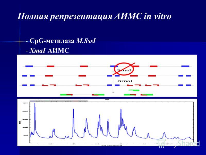 Полная репрезентация АИМС in vitro - CpG-метилаза M.SssI - XmaI АИМС